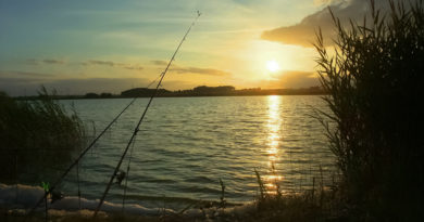 Best carp fishing rods